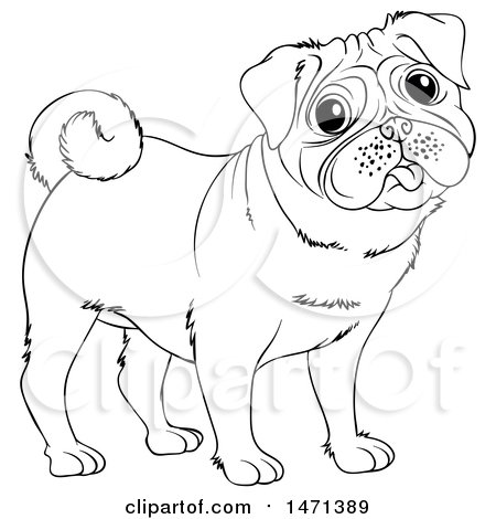 450x470 Clipart Of A Happy Pug Dog