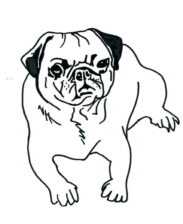 Pug Dog Drawing at GetDrawings.com | Free for personal use Pug Dog ...