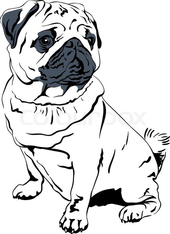 581x800 Vector Sketch Dog Pug Breed Hand Drawing Vector Stock Vector