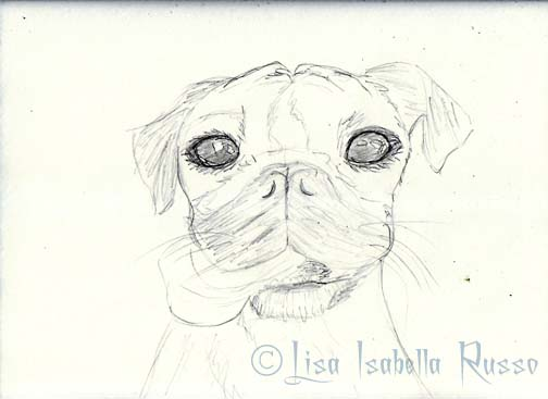 504x367 The Fine Art And Ramblings Of Lisa Isabella Russo Sketch Of Peony
