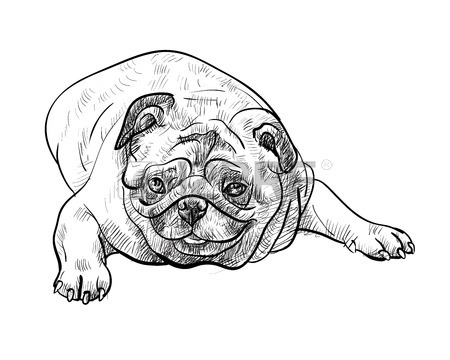 450x360 Drawing Pug Dog Lying On White Background Stock Photo, Picture