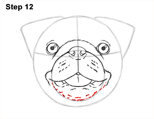 500x386 How To Draw A Pug (Head Detail)