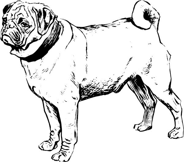 600x530 Awesome Pug Drawing Coloring Page Color Luna