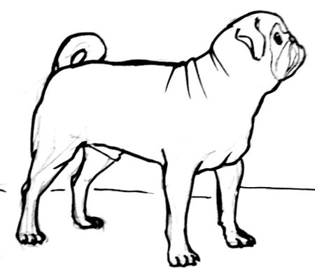450x394 How To Draw A Pug