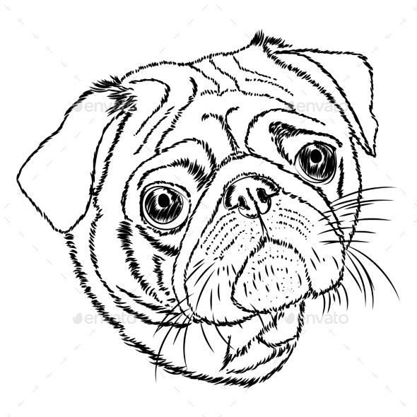 590x590 Pug Vector Linear Illustration On A White Background Pug Rescue