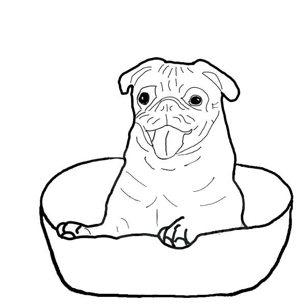 600x600 Pug Is Happy Inside A Bowl Coloring Page Color Luna