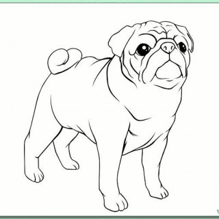 320x320 Tag For How To Draw A Pug How To Draw A Pug She S Crafty Drawing