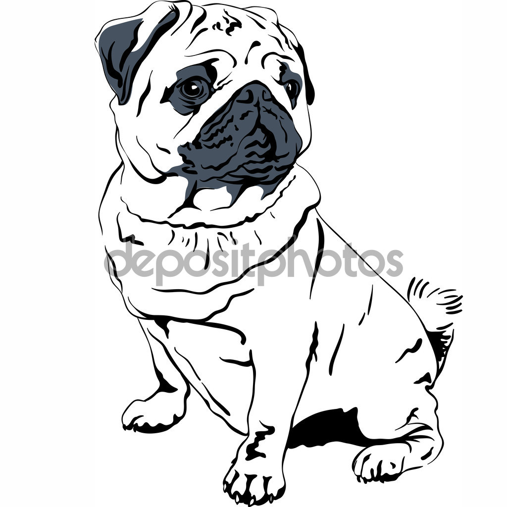 1024x1024 Vector Sketch Dog Pug Breed Hand Drawing Vector Stock Vector