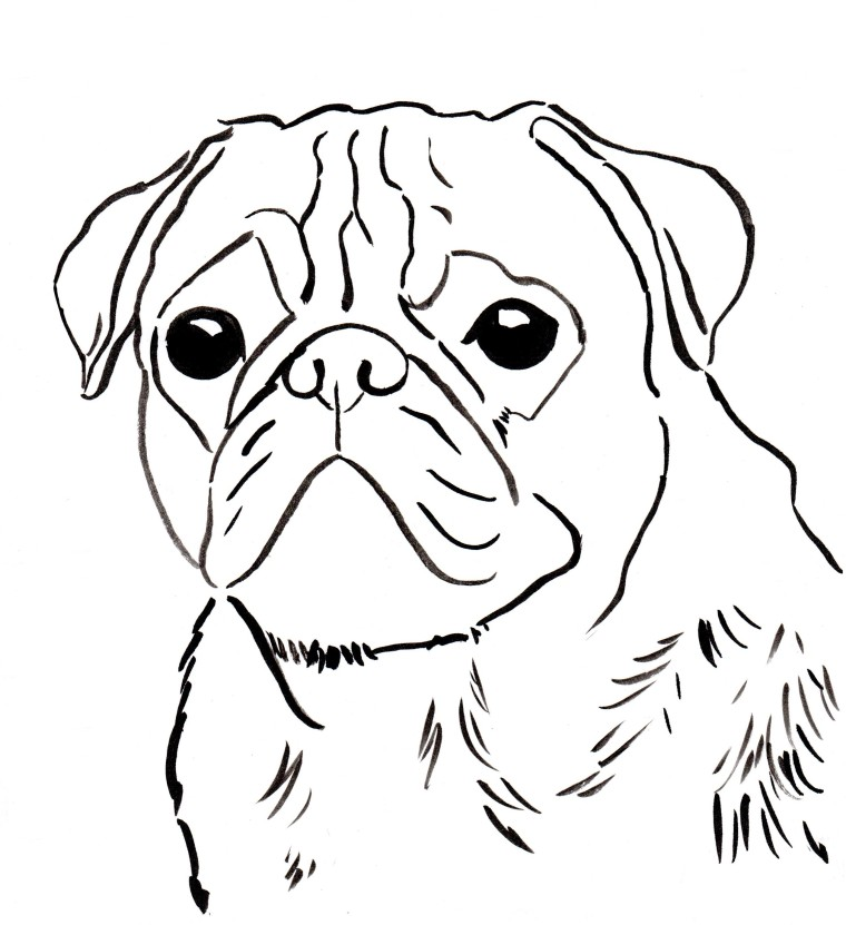 760x831 Free Pug Coloring Page To Download And Print.