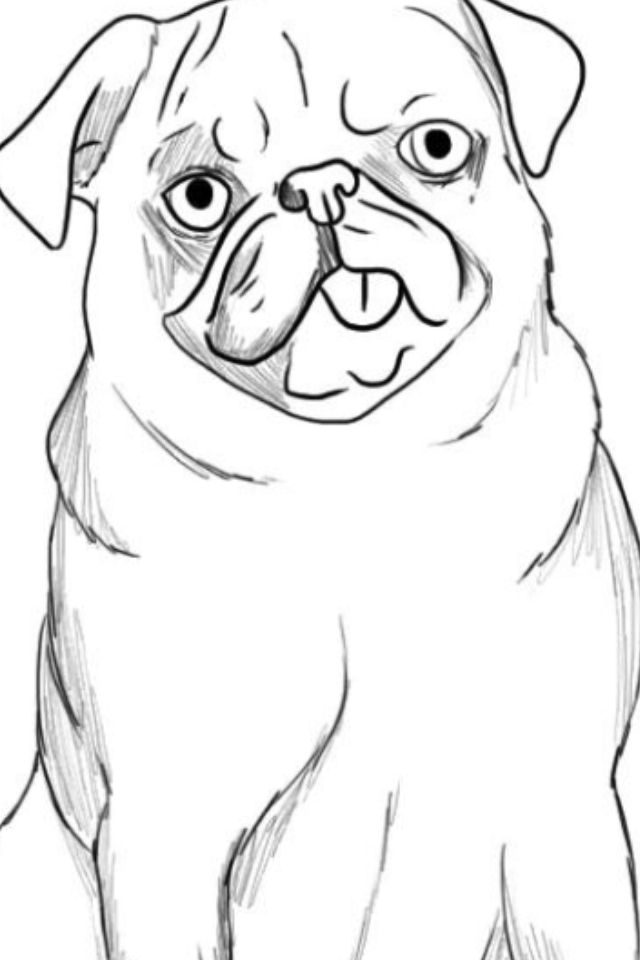 Pug Face Drawing