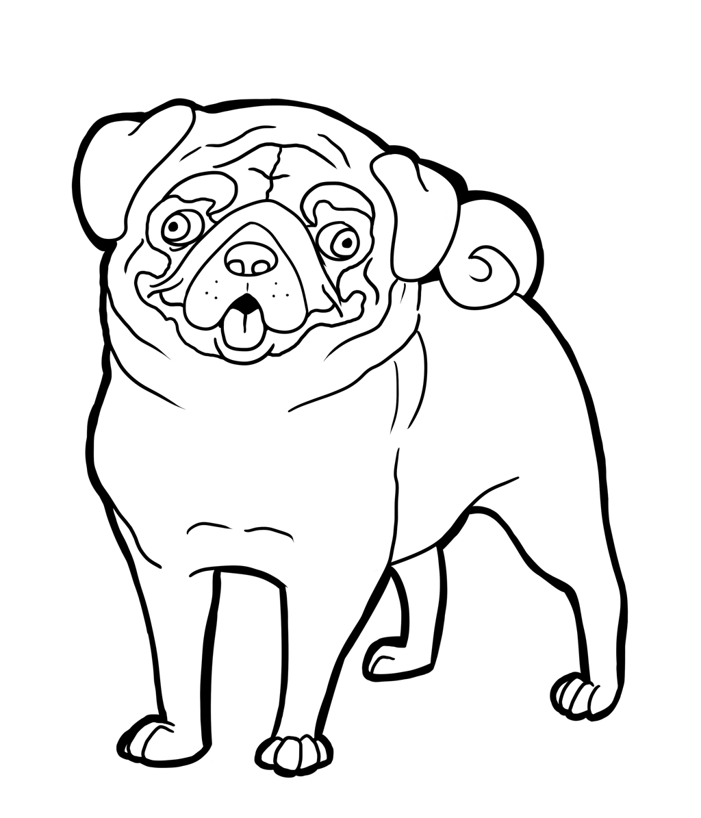 1024x1195 pug coloring pages to download and print for free pug