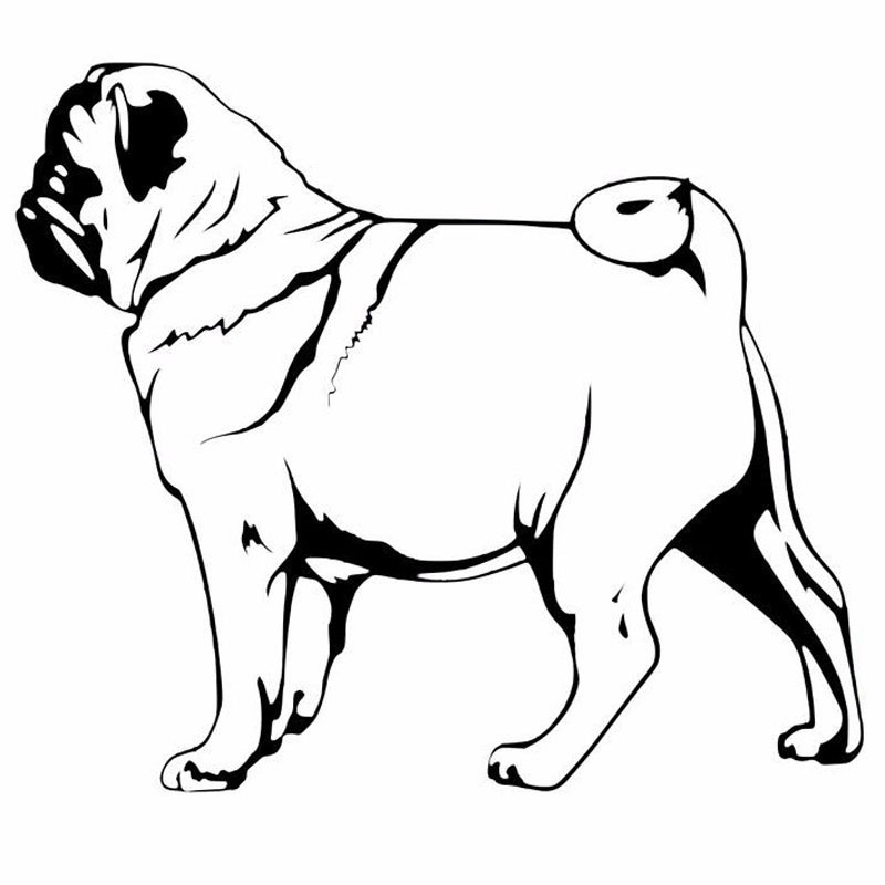 800x800 Buy Car Sticker Pug And Get Free Shipping