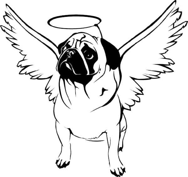 Pug Puppy Drawing