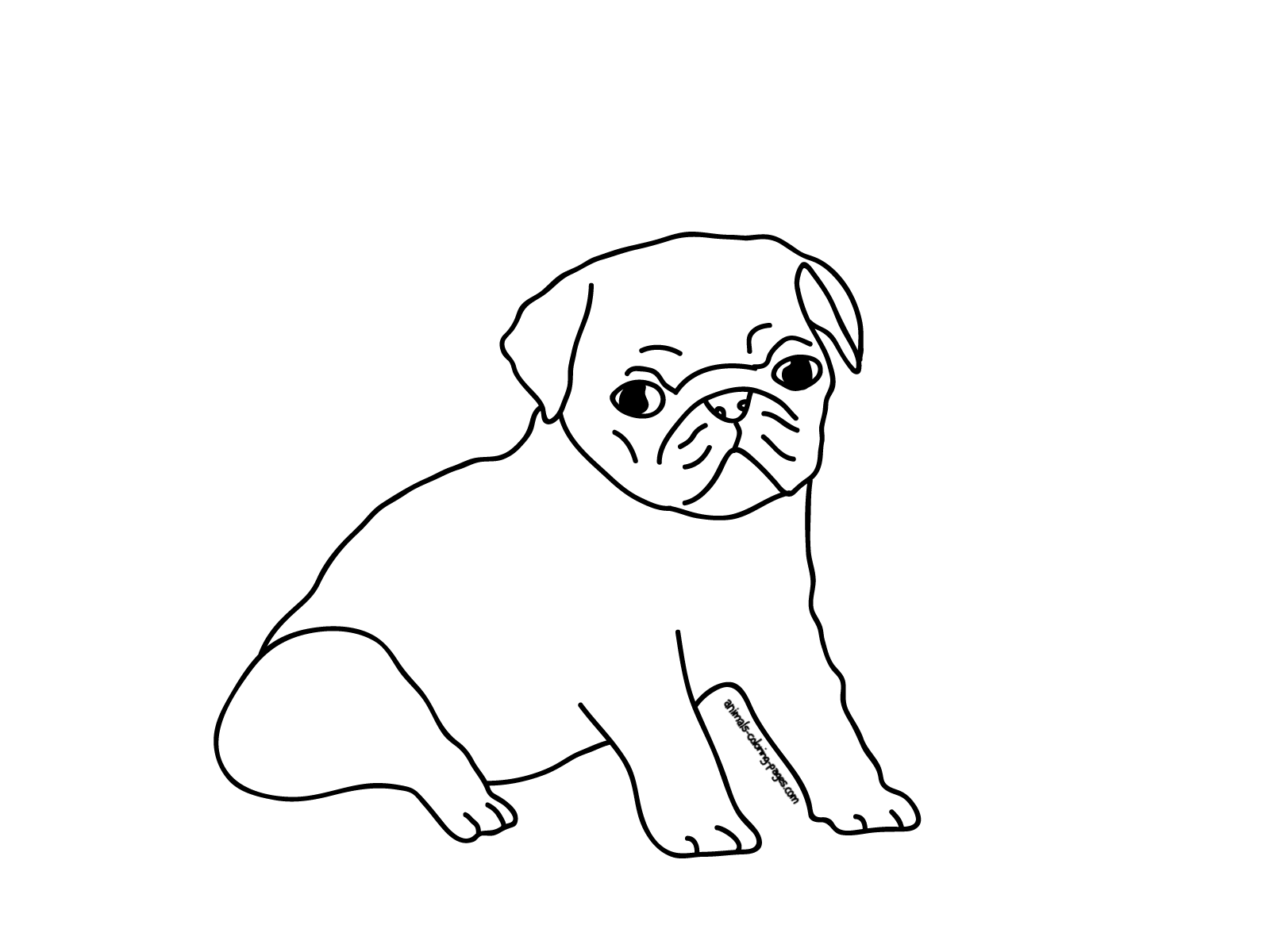 1600x1200 printable coloring pages puppy pugs pug draw pinterest