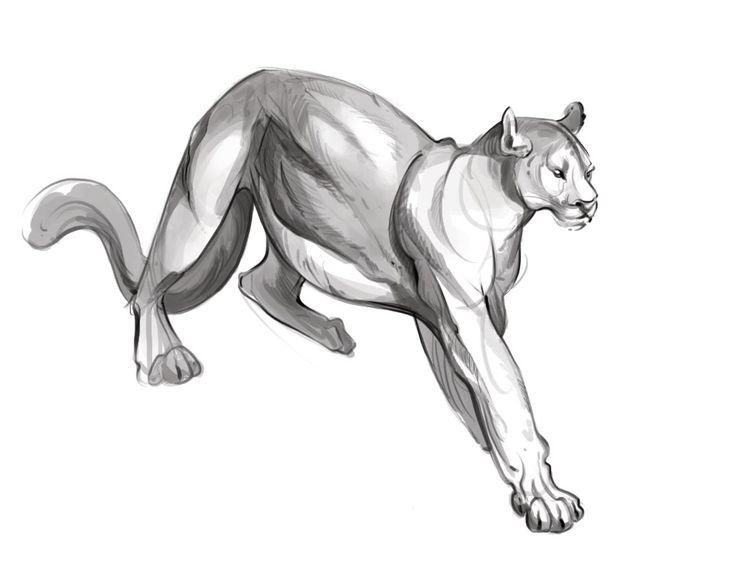 Puma Drawing