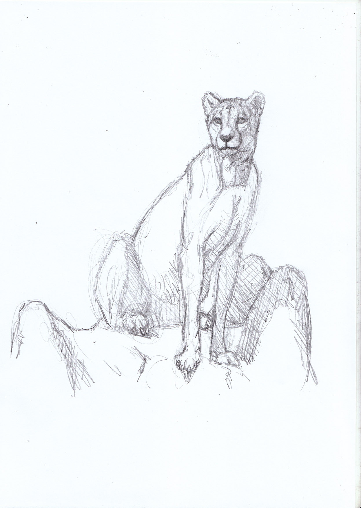 1246x1754 Looking From A High Place Cheetah On Termite Mound Sketch