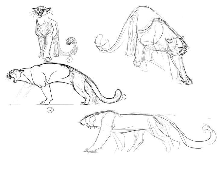 736x560 Cougar Illustration Concepts 1 By ~davidsdoodles