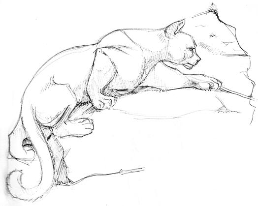 524x419 Puma Study By Kingjackalope