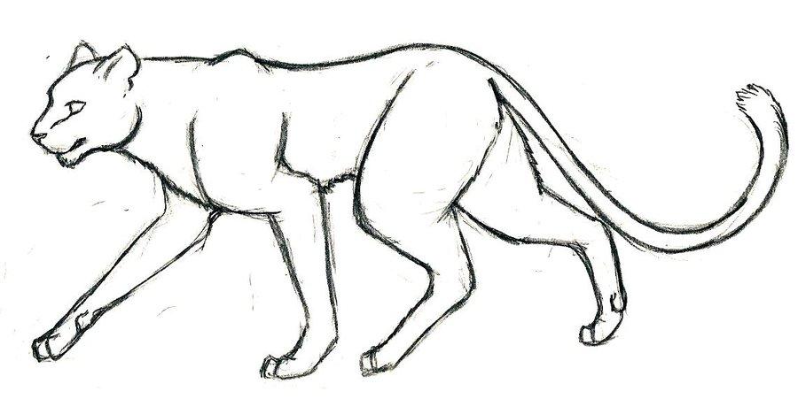 900x451 Puma By Dragonwolfstar