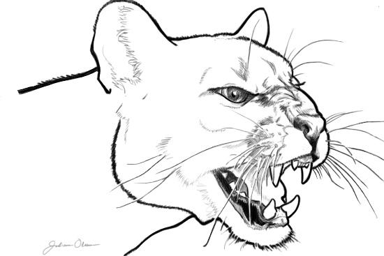 550x367 Puma Concolor By Juliolsson
