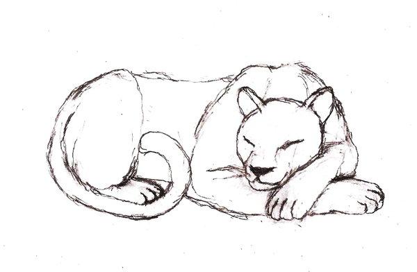 600x392 Persian Puma By Rhahsid