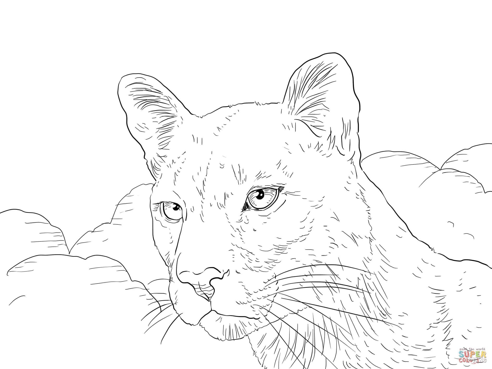 2048x1536 Puma Animal En Venezuela Free Draw To Color