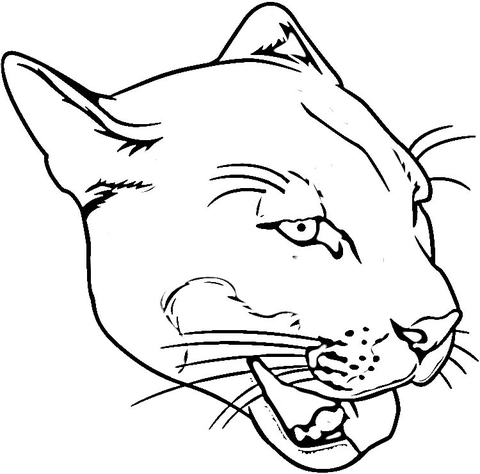 480x474 Face Of Puma Coloring Page Free Printable Coloring Pages