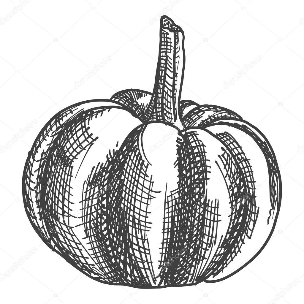 1024x1024 Hand Drawing Pumpkin Sketch Stock Vector Goldenshrimp