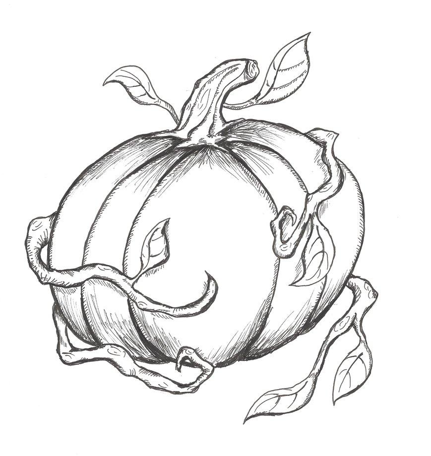 869x919 Pumpkin (Line Drawing) By Geomerisc