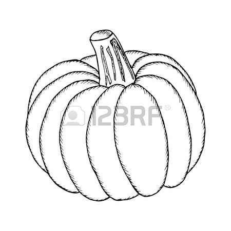 450x450 Pumpkin Vector Drawing Set. Isolated Outline Vegetable, Plant