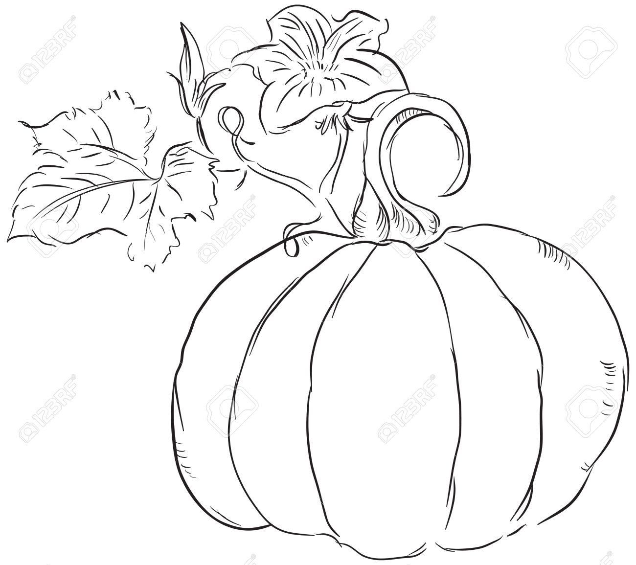 1300x1155 The Fruit Of The Pumpkin With Leaves And Blossoms Ovary. Royalty