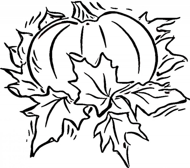 800x706 Free Printable Pumpkin Coloring Pages For Kids