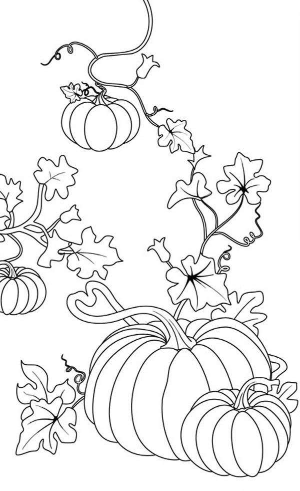 600x980 Pumpkins Coloring Page For