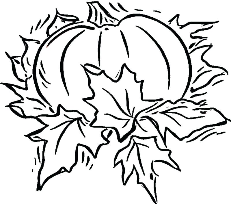 800x706 Pumpkin Coloring Pages Free Blank Pumpkin Coloring Page Pumpkin