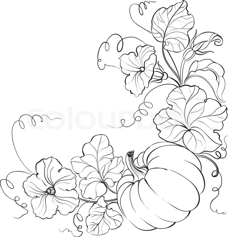 Pumpkin Plant Drawing at GetDrawings.com | Free for ...