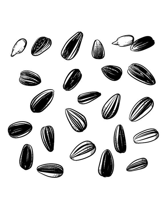 Pumpkin Seeds Drawing