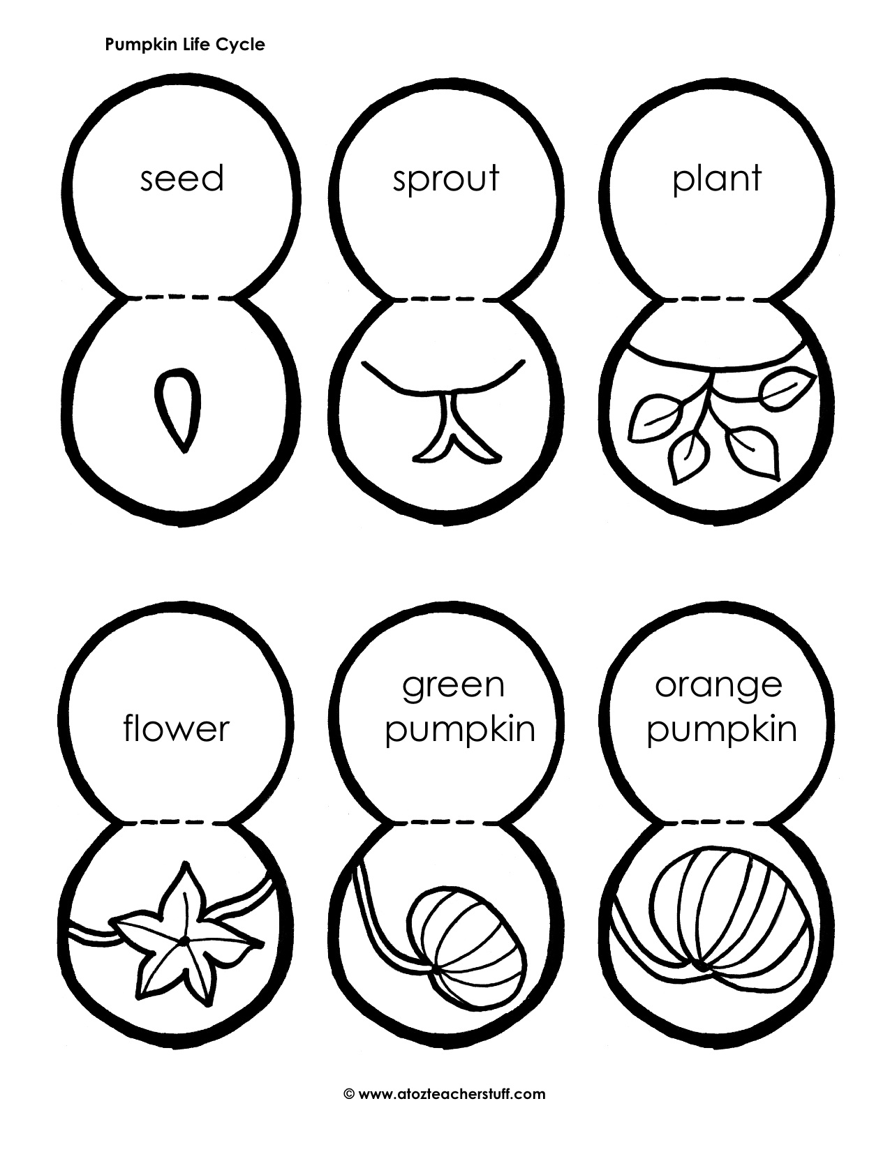 picture about Pumpkin Life Cycle Printable called Pumpkin Seeds Drawing at  Free of charge for unique