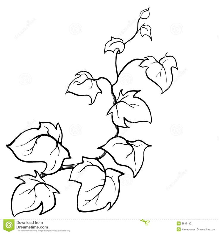 Pumpkin vines drawing at free for for Pumpkin leaves coloring pages