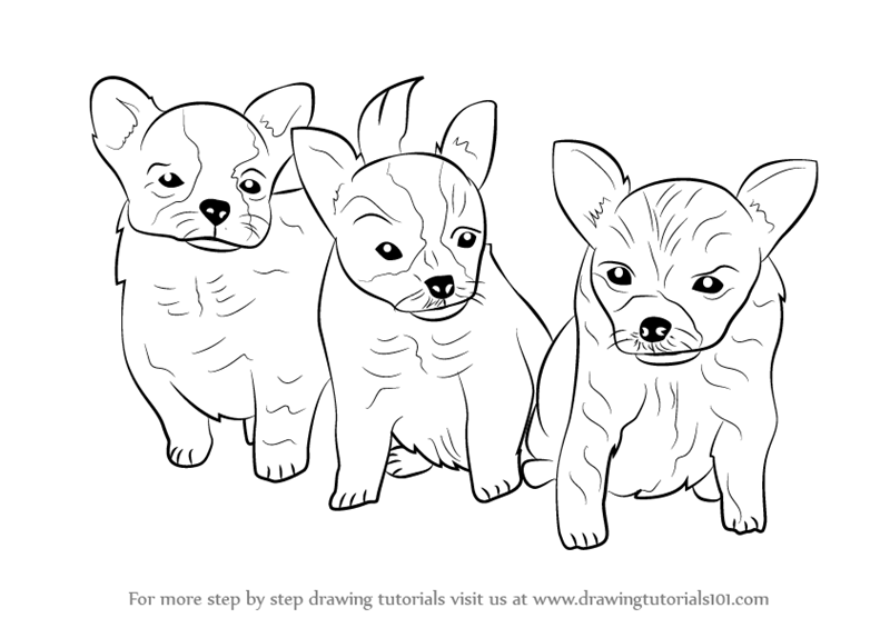 800x565 Learn How To Draw Puppies (Dogs) Step By Step Drawing Tutorials