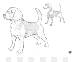 260x220 Free Download Beagle Puppy Dog Breed Drawing Sketch
