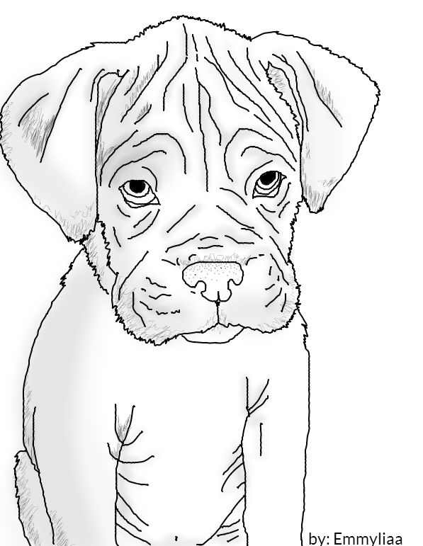 597x771 How To Draw A Boxer Puppy How To Draw A Boxer Easy Step Step
