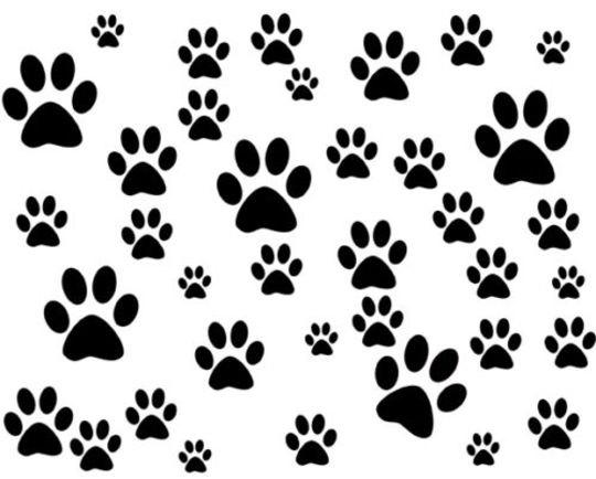 540x434 Dog Puppy Paws