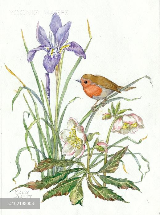 519x700 Illustration By Molly Brett Featuring Robin, Purple Irisnd