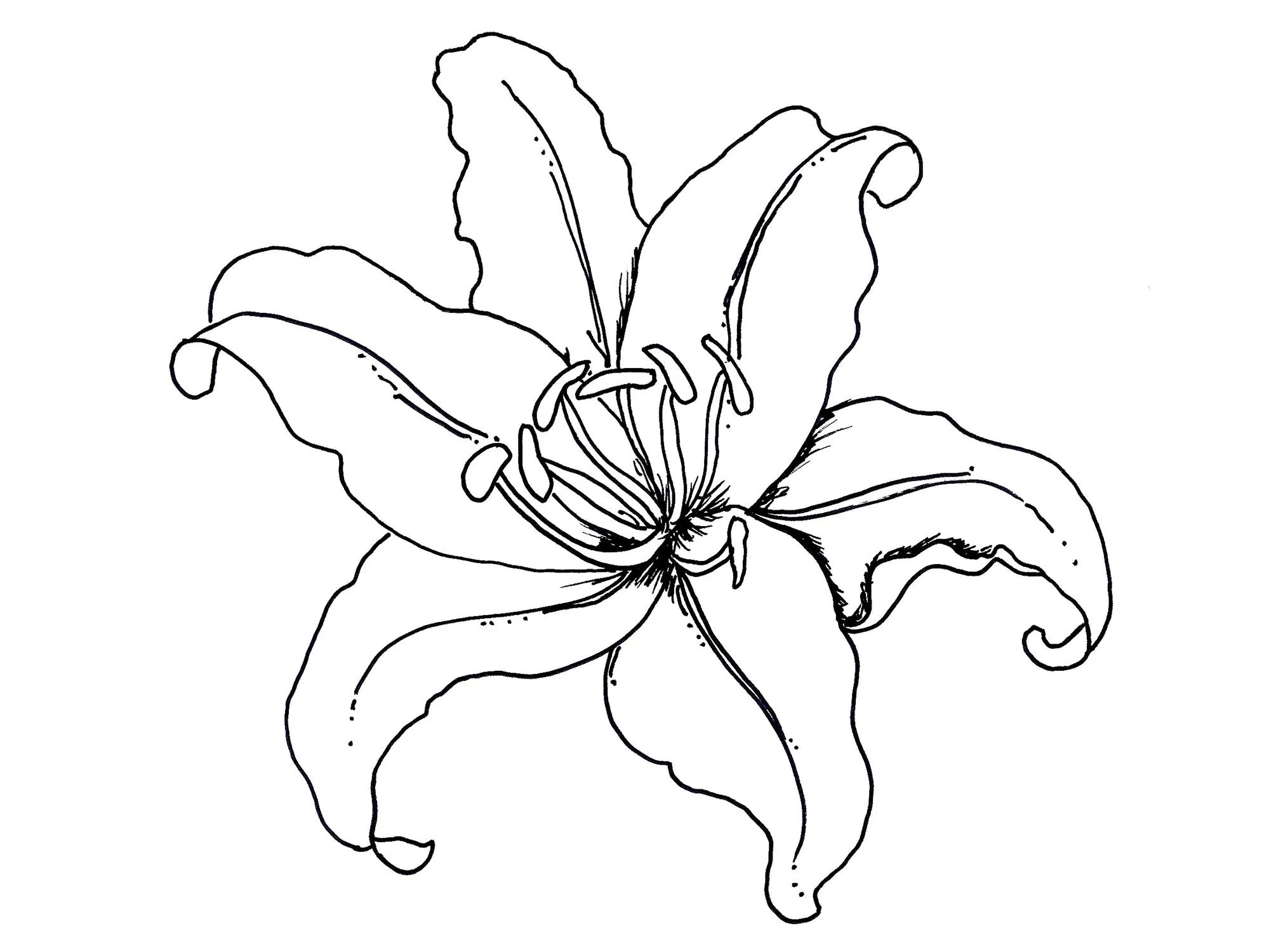 1999x1500 Iris Coloring Flower Coloring Pages Amp Cliparts