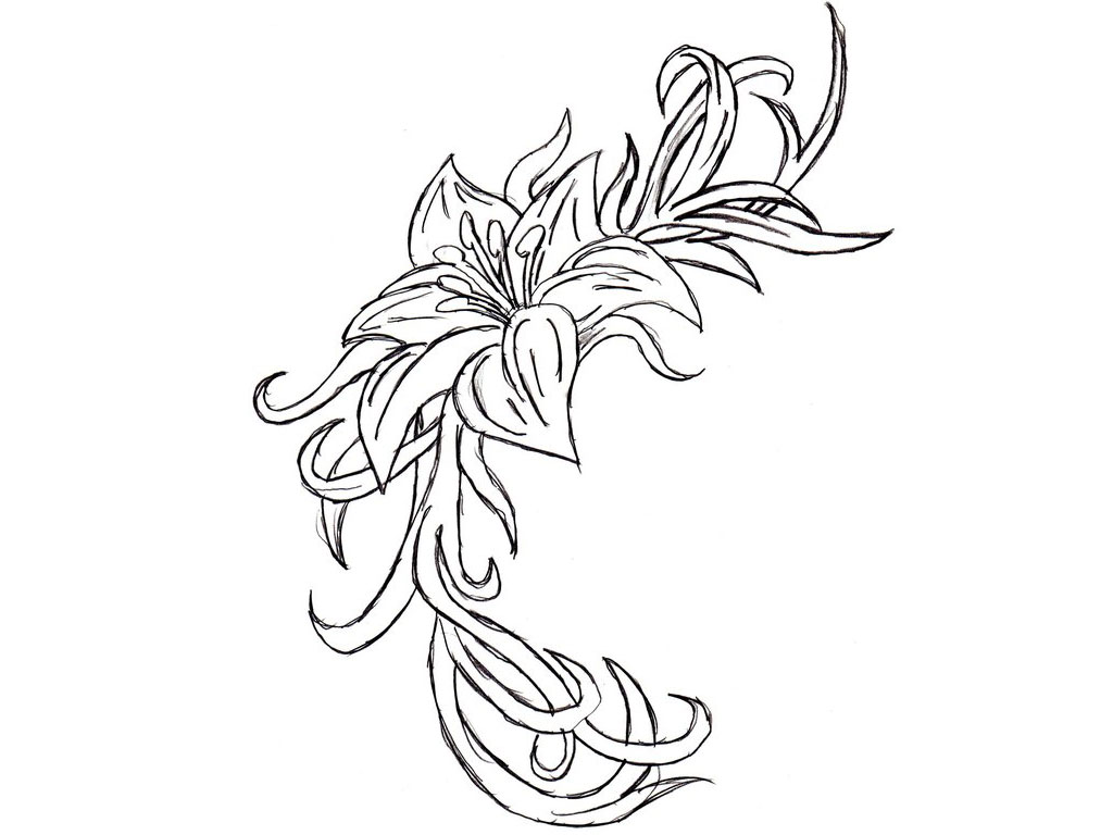 1024x768 Gousicteco Orchid Drawing Outline Images