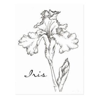 324x324 Flower Drawing Postcards Zazzle Uk