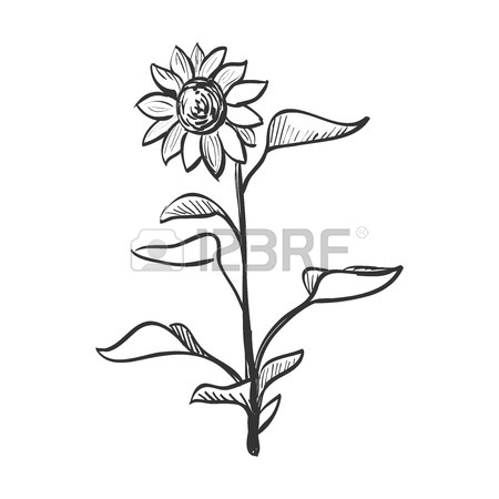 450x450 Hand Drawn Flower Stock Photos. Royalty Free Business Images