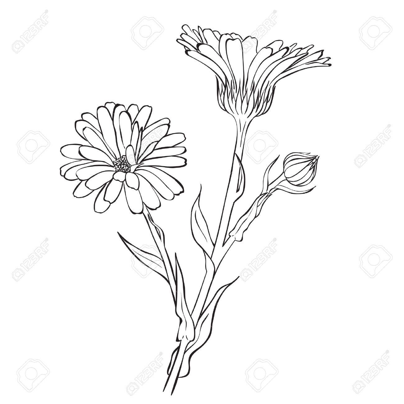 1300x1300 Hand Drawn Flowers