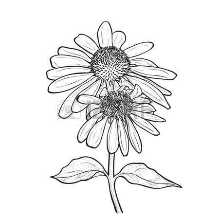 450x450 Hand Drawn Flowers