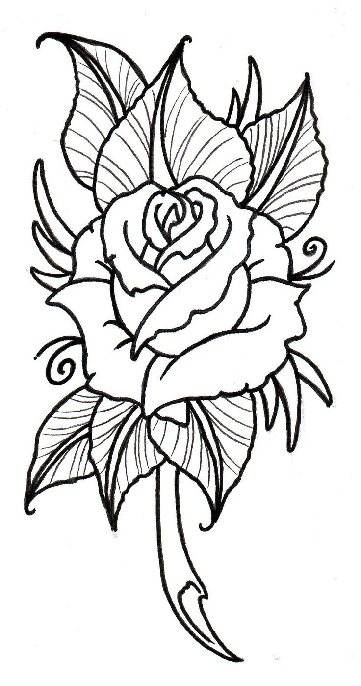 736x1397 The Best Rose Outline Drawing Ideas On Watercolor